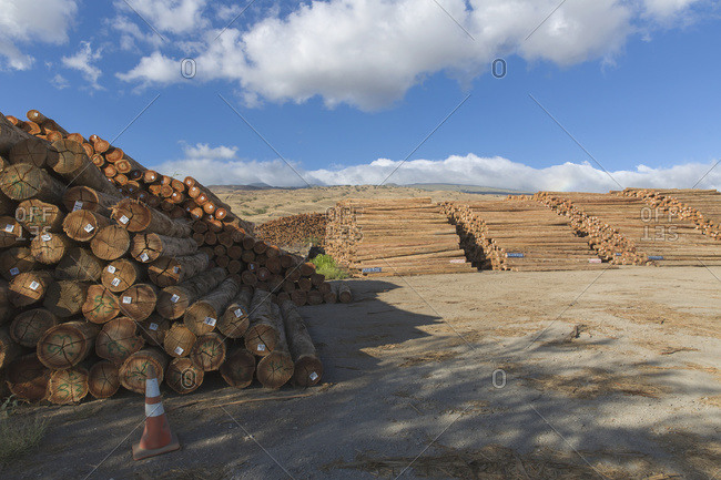 Eucalyptus (Eucalyptus regnans) logs near harbor and ready for shipping to Japan from Kawaihae Harbor in Kohala; Kawaihae, Island of Hawaii, Hawaii, United States of America