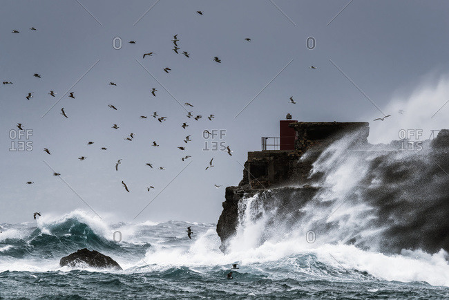 Waves crashing against the rugged rock coastline as birds fly overhead against a blue sky; La Isla, Tarifa, Costa de la Luz, Cadiz, Andalusia, Spain