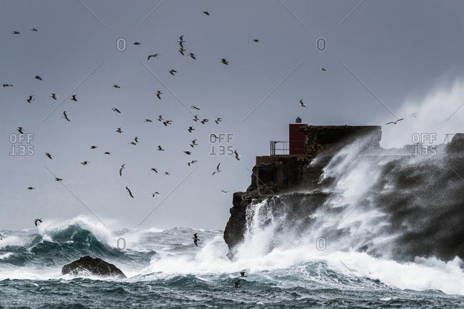 Waves crashing against the rugged rock coastline as birds fly overhead against a blue sky; La Isla, Tarifa, Costa de la Luz, Cadiz, Andalusia, Spain