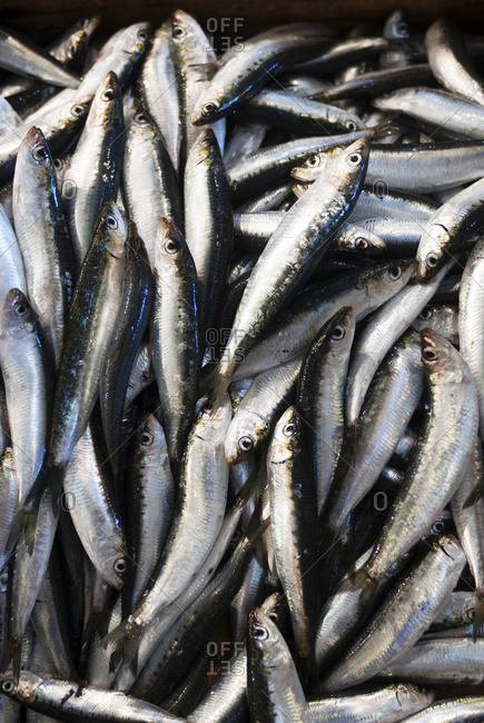 Fresh sardines at the outdoor fish market; Pylos, Messinia, Greece