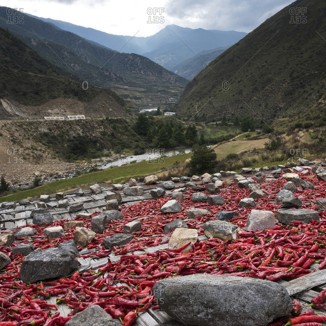 Red peppers laid out to dry; Thimphu, Bhutan