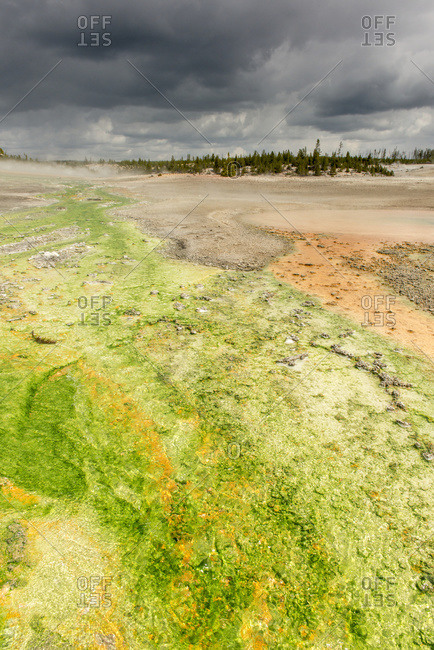 Coloured algae grow along flowing hot spring water in the Norris Geyser Basin in Yellowstone National Park; Wyoming, United States of America