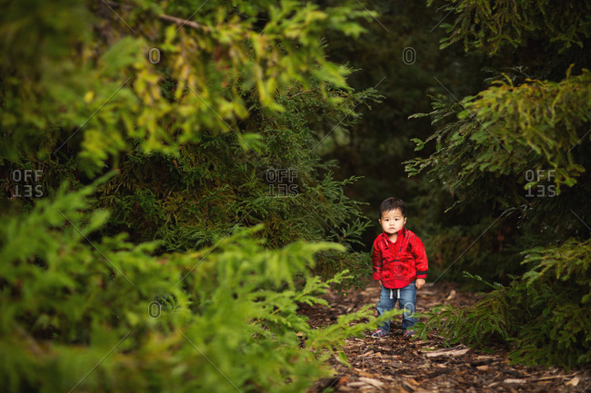 Boy in dense wood setting