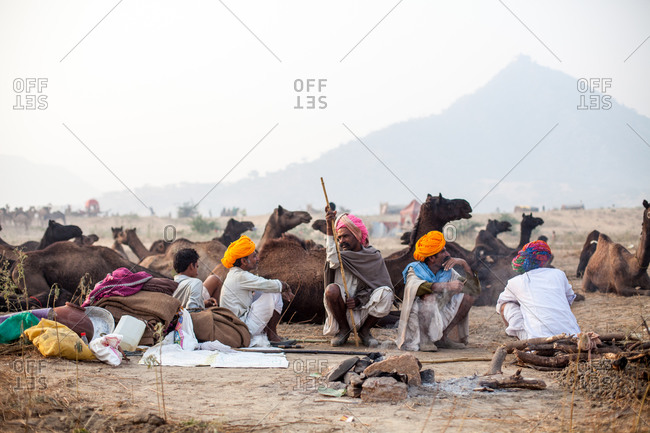 November 16, 2015: Group of men relaxing with herd of camels in India