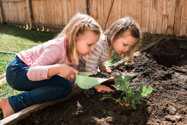Two little girls working together in the garden