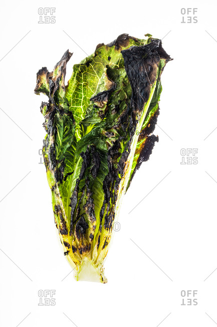 Grilled romaine lettuce on a white background