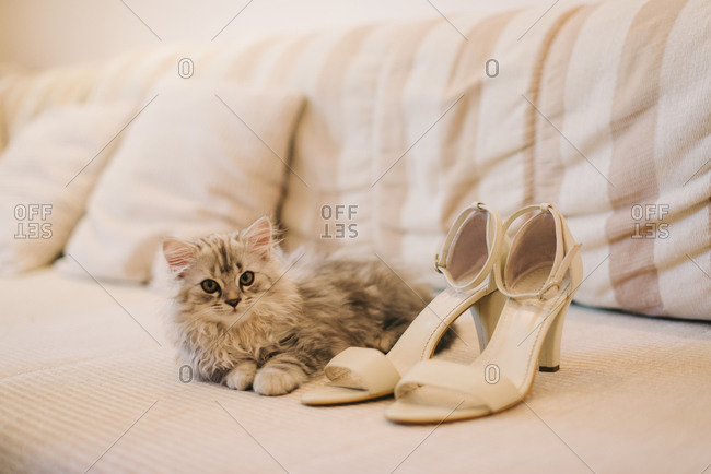 Kitten lying on a couch next to a pair of nude high heels