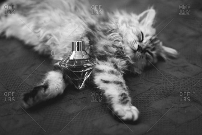Kitten sleeping on a carpet with a diamond-shaped perfume bottle