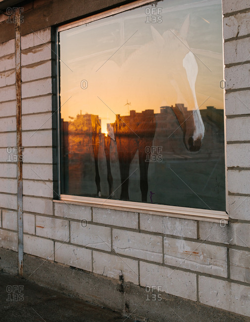 Horse mural on a window illuminated by the setting sun