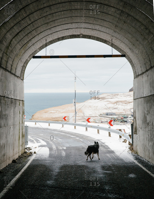 Dog walking across a snowy road at the entrance to a tunnel in the Faroe Islands