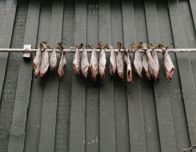 Fish hanging from a pole attached to a wood wall in the Faroe Islands