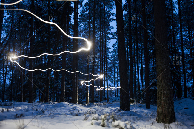 Light trail in forest