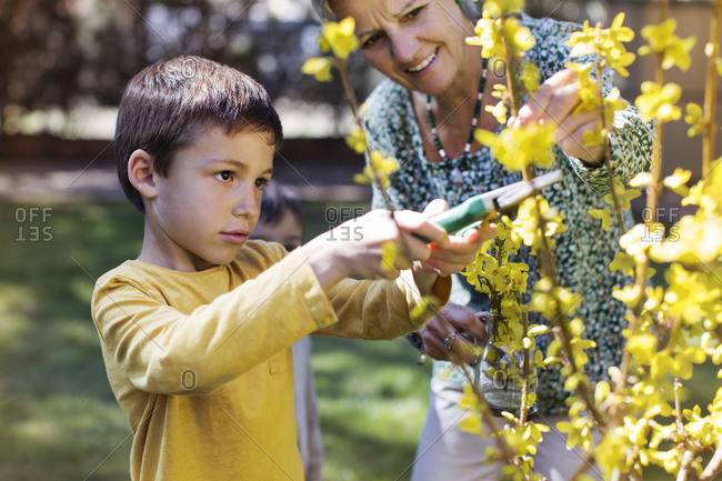 Happy senior woman looking at grandson clipping flowers at lawn