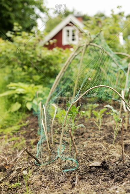 Net over plants in garden