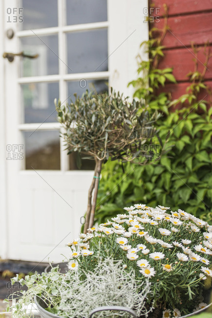 Flowers and plants in garden