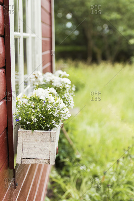 Flowers in wooden pots