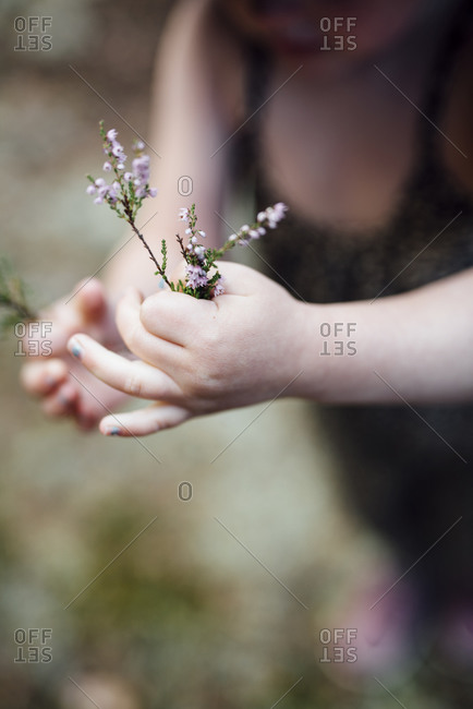 Childs hands with heather