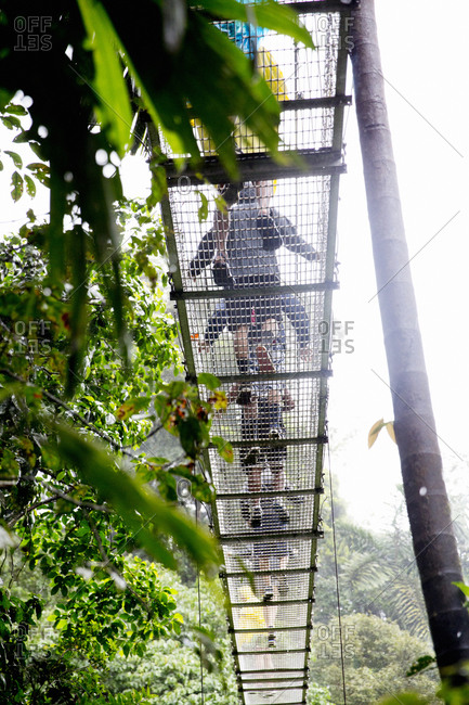 Tourists on rope bridge in rainforest, low angle view
