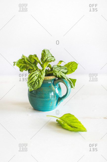 Basil in a turquoise ceramic pitcher