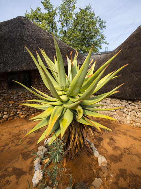 Namibia, Outjo, Ongava Wild Reservat