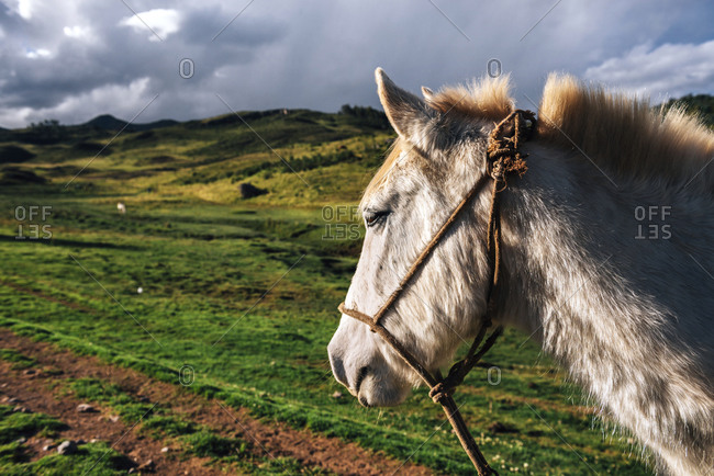 Peru, Cusco, profile of a horse
