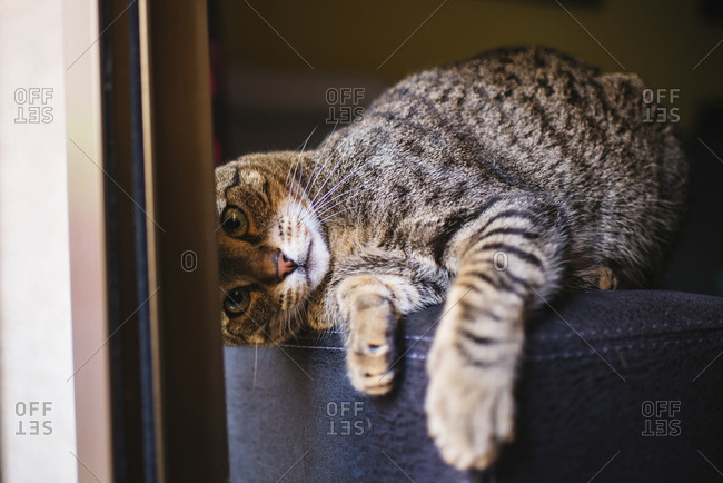 Portrait of playful tabby cat