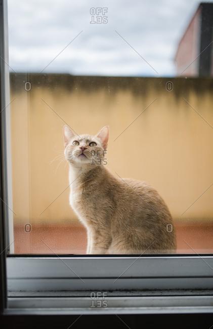 Portrait of cat sitting behind window pane looking up