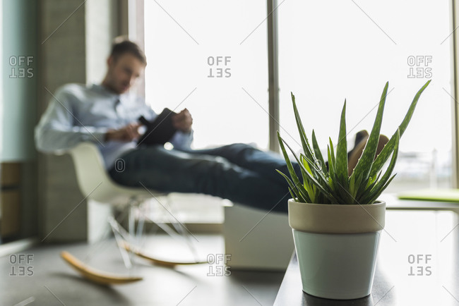 Potted plant and young man in background using digital tablet