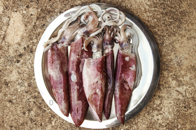Fresh squid served on a plate