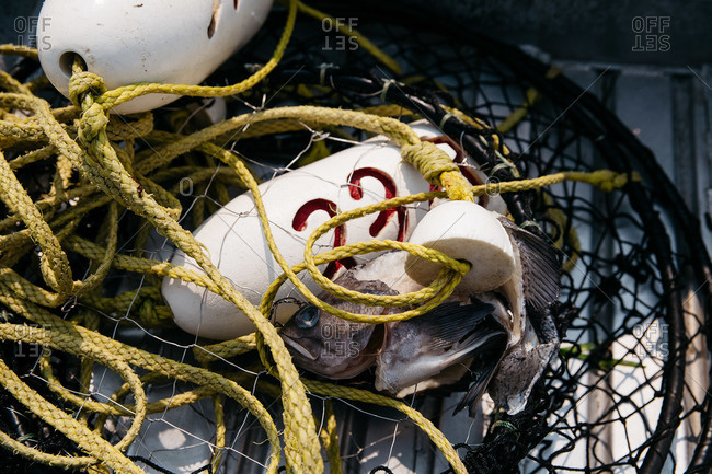 Close-up of a fish, fishing net and buoy