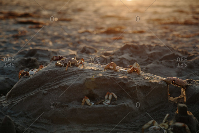 Crab shells on a mound of sand at the beach