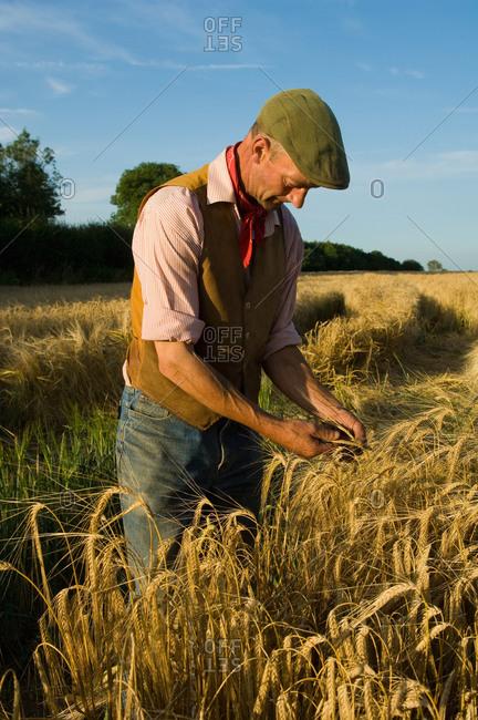 Farmer working in field of barley