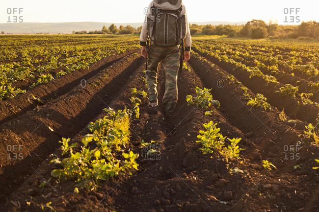 Backpacker on vegetable farm, Sarsy village, Sverdlovsk region, Russia