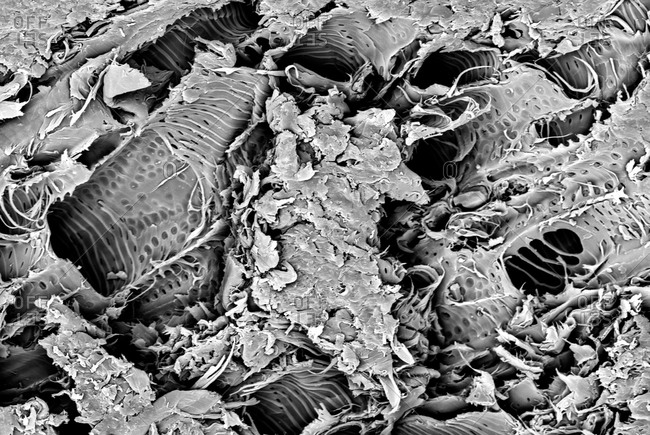 Micro structure from a piece of Lacewood, imaged in a scanning electron microscope