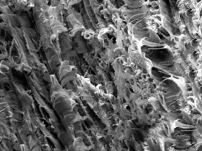 Micro structure from a fracture of Lacewood, imaged in a scanning electron microscope