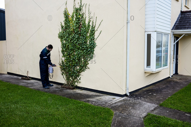 Pest control man spraying pesticide in trees outside house