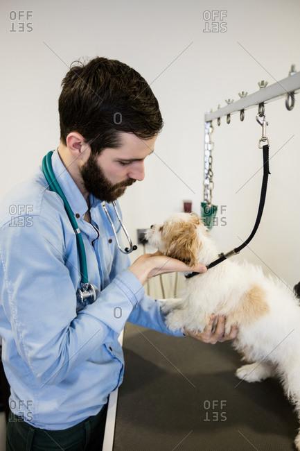 Vet examining a dog in clinic