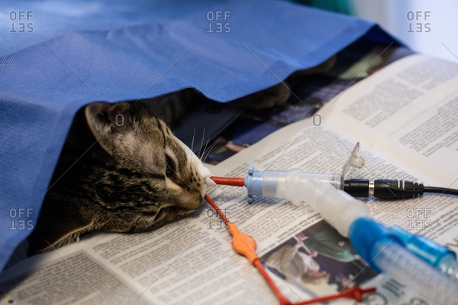 Sick cat on a iv drip in clinic