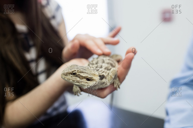Mid-section of girl petting her pet lizard in clinic