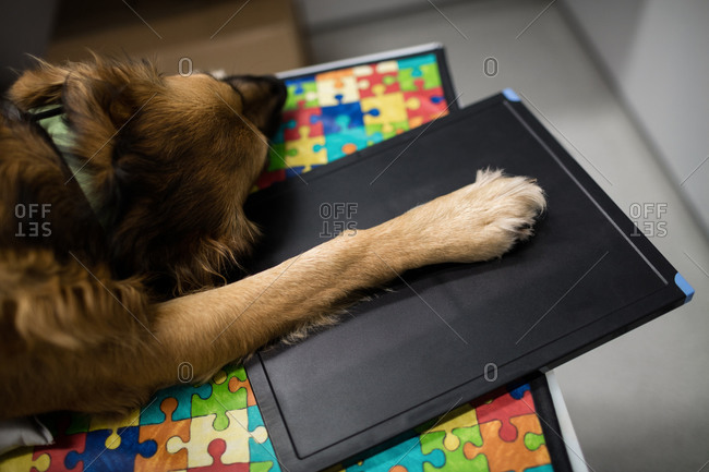 Dog lying on examination table in clinic
