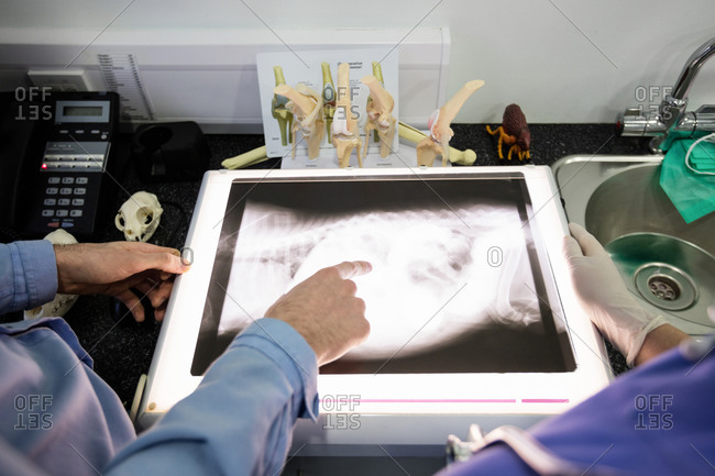 Mid-section of vets examining x-ray of animal in clinic