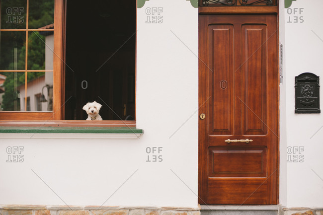Dog at window, Spain