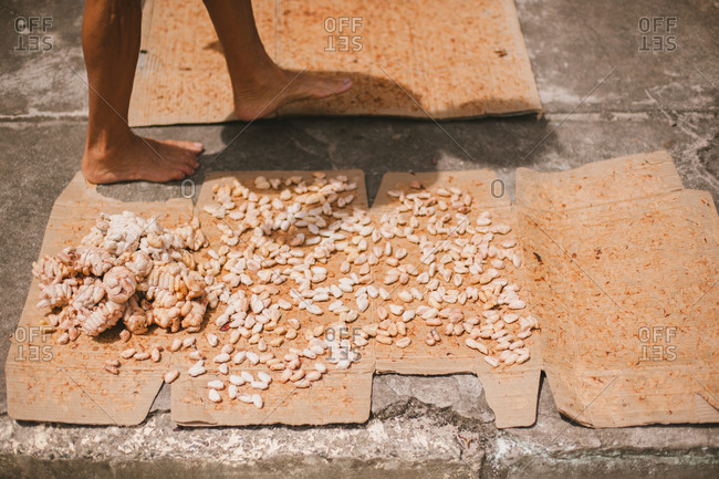 Feet by seeds drying