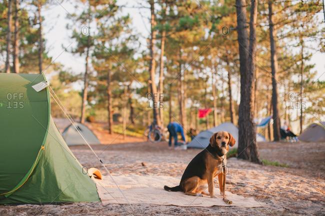A dog in a campsite