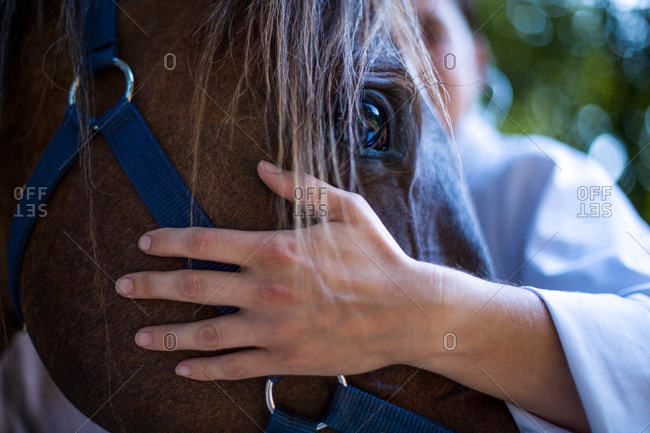 Close up on the vets hand rest on horses head on a paddock