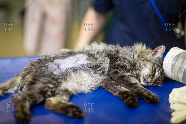 Close up on sick kitten lying on examination table on the surgery