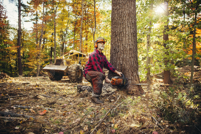 Male lumberjack cutting tree trunk with chainsaw in forest