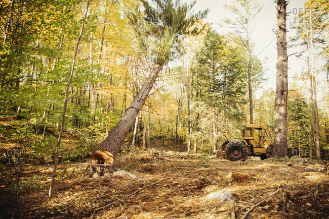 Construction vehicle in forest during autumn