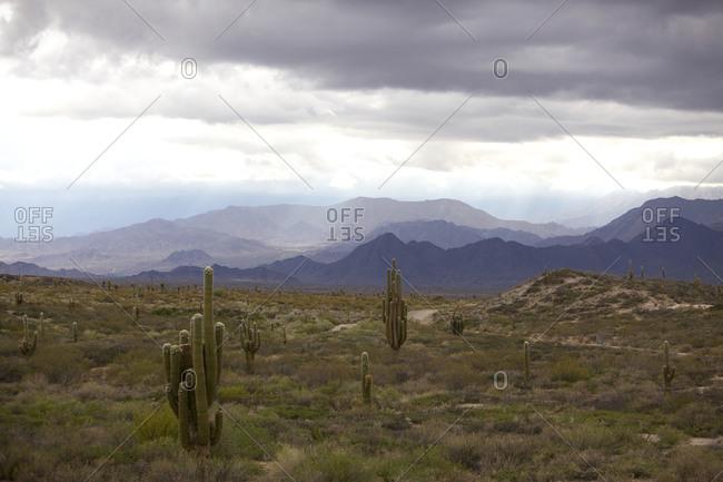 Picturesque view of Parque National Los Cardones Salta, Argentina