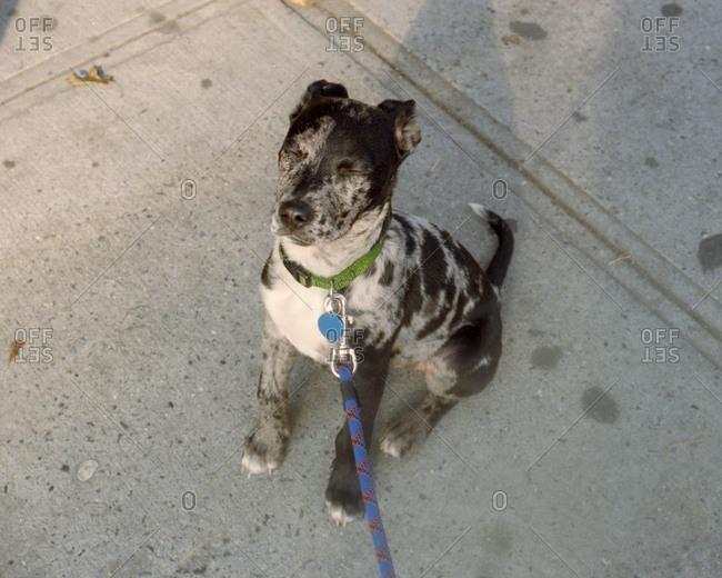 Dog sitting on sidewalk with eyes shut